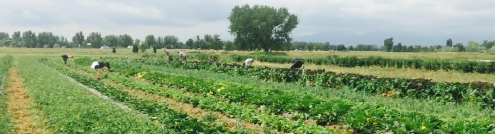 plowshares community farm